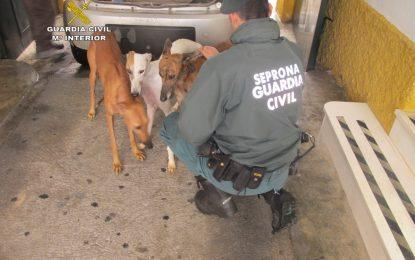 El Seprona ha realizado durante 2016 más de 11.700 actuaciones contra el maltrato animal