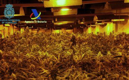 Intervenidas 17.000 plantas de marihuana cultivadas en naves industriales por una red de ciudadanos españoles y chinos